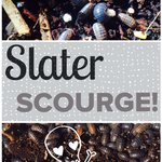 Slater Scourge Feature_AFOYH_020915