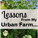 Lessons From my Urban Farm…